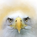 Bald Eagle Paint No 01 by Maria Astedt