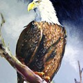 Bald Eagle by Paul Miller