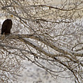 Bald Eagle-signed-#4879 by J L Woody Wooden