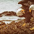 Bald Eagles Family Discussion by Max Rose
