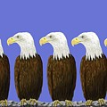 Bald Eagles by Stacy C Bottoms