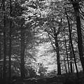 Baldringe Meadows by Somerled Karlsson