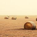 Bales In The Fog by Todd Klassy