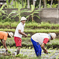 Bali Farming by Jijo George