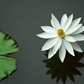 Bali Flower by Lee Craker