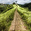 Bali Landscape 4 by Jijo George