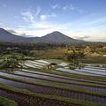 Bali Terrace Rice Field by Budi Nur Mukmin