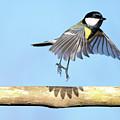 Ballerina Bird by Marcel ter Bekke