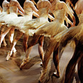 Ballet Dancers 05 by Gull G