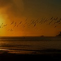 Ballet In The Golden Sunrise, Early Fall. by John R Williams