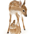 Bambi And Thumper by Warren Photographic