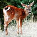 Bambi by David Lee Thompson