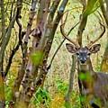 Bambi's Father by Michael Tidwell
