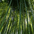 Bamboo 01 by Michael Parks