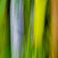 Bamboo Abstract by James Woody