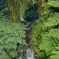 100837-bamboo And Ferns Creek  by Ed  Cooper Photography