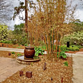 Bamboo At The Botanical Gardens by Marian Bell