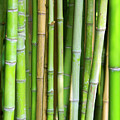 Bamboo Background by Carlos Caetano