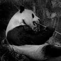 Bamboo, Bamboo, Bamboo by Maria Reverberi
