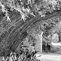 Bamboo Black White Rip Van Winkle Gardens  by Chuck Kuhn