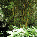 F8 Bamboo by Donald k Hall