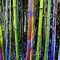 Bamboo Dreams #13 by Ed Weidman