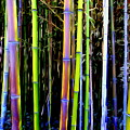Bamboo Dreams #14 by Ed Weidman