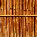 Bamboo Fence by Yali Shi