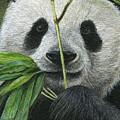 Bamboo Foodie by Morgane Antoine
