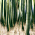 Bamboo Forest by Alex Szopa