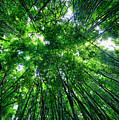Bamboo Forest by Eddie Yerkish
