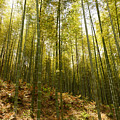 Bamboo Forest by Erik Pearson
