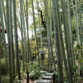 Bamboo Forest by Eena Bo