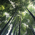Bamboo Forest by Mitch Warner - Printscapes