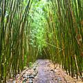 Bamboo Forest Trail Hana Maui 2 by Dustin K Ryan