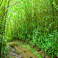 Bamboo Forest Trail by Kelley King