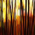 Bamboo Garden Abstract by Patricia Strand