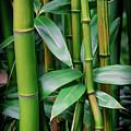Bamboo Green by Athena Mckinzie