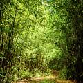 Bamboo Hike by Cory Huchkowski