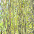 Bamboo In San Diego Zoo by Kenneth Roberts