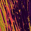 Bamboo Johns Yard 8 by Gary Bartoloni