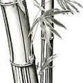 Bamboo by Karla Beatty