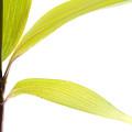 Bamboo Meditation 2 by Carol Leigh