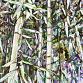 Bamboo Sprouts Forest by Jeelan Clark