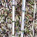 Bamboo Stalks by Jeelan Clark