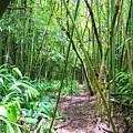 Bamboo Trail by Debra Casey