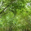 Bamboo Trees In Wangjianglou Park In Chengdu China by Julia Hiebaum