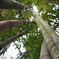 Bamboo View by Mandy Shupp