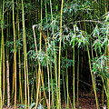 Bamboo Wind Chimes  Waimoku Falls Trail  Hana  Maui Hawaii by Michael Bessler
