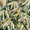 Bamboo2 by Sandra Shelton